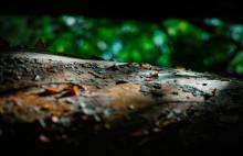 Är det ondskefullt att döda ett träd? Fotoutställning i Subtopia