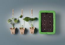 Starta odlingssäsongen med sticklingar
