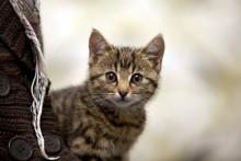 Kattägare avstår försäkring trots oro för sjukdomar