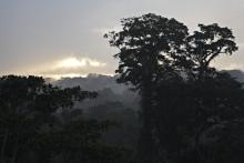 Danskerne: Skove er vigtige for at bremse klimaforandringerne