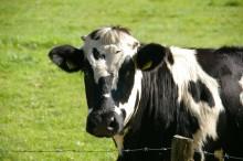 Nachhaltigkeit und Tierwohl in der Milchwirtschaft