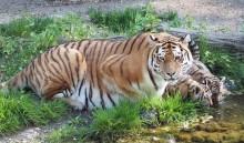 """Die jungen Wilden sind los: Entdeckertage """"Jungtiere"""" im Zoo Leipzig"""