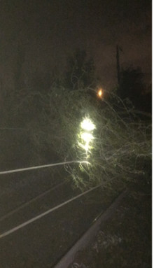 Major rail disruption between Walsall and Birmingham following tree fall
