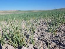 Landbruket inviterer statsministeren til krisebefaring