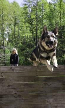 Stort intresse när Memea Mohlin föreläser om hundar
