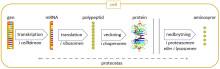 Hur Trisomi 21 påverkar cellernas proteiner