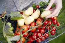80 procent föredrar frukt och grönsaker från egen trädgård