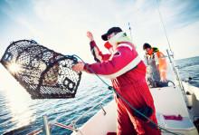 """HaV planerar översyn av hummerfisket: """"Målet är ett hållbart fiske och sunda ekosystem"""""""