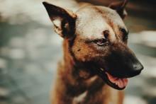 Pressinbjudan: så lär vi oss se sambanden mellan våld mot djur och människor