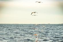 Ny förvaltningsplan för torsk, sill/strömming och skarpsill i Östersjön