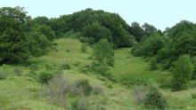 Endelig: Verdens Skove har fået en samarbejdsaftale om Bjergskov i Sønderjylland