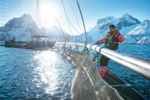 Norwegischer Räucherlachs – gesunde Delikatesse aus dem hohen Norden
