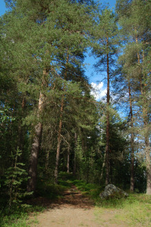 ELLE Interiör söker inspiration i Norrbotten inför Stora Nolia