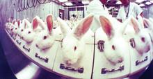 Försäljningsförbud sätter stopp för kosmetikatester på djur