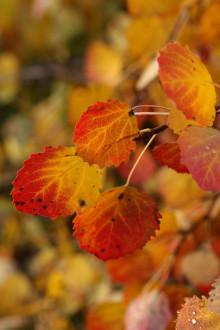 Tusentals elever hjälper forskare förstå hösten