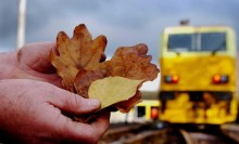 Autumn leaf fall timetable on Abbey Line from October 24