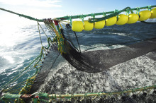 Økt eksport av pelagisk fisk i 2014