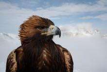 HOSTILE PLANET on uusi luontodokumenttisarja jännityksen äärirajoilla - tämä henkeäsalpaava sarja saa ensi-iltansa National Geographic -kanavalla 28. huhtikuuta