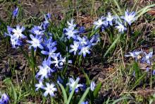 Frühlingsgruß aus Taucha