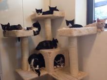 Herreløse Katte - En sag der kræver handling!