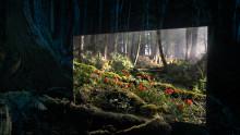 La nouvelle publicité des téléviseurs BRAVIA OLED de Sony métamorphose une forêt sombre  et mystérieuse en lui offrant des fenêtres  de lumière chatoyante.