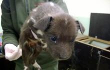 13 nyfödda vildhundsvalpar i Borås Djurpark!