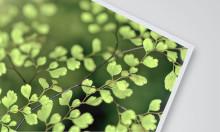 gop lanserar  Ecoprint - Hållbarhet, låg vikt och utmärkta tryckresultat