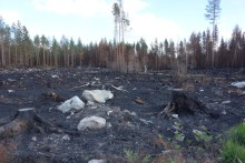 Ytterligare 12 miljoner kronor till forskning om skogsbranden i Västmanland