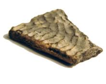 Svenskt sköldpaddsfossil förbluffar