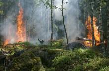 Extremt hög brandrisk och torka i skog och mark