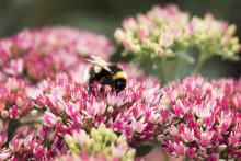 Blomsterlandet och Naturskyddsföreningen i fördjupat samarbete