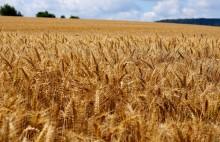 9,5 miljarder i jordbrukarstöd före årsskiftet