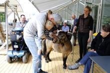 Greve Kommune forlænger kontrakt: Forenede Care skal fortsat drive Langagergård Plejecenter