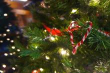Fortsatt populært å hogge eget juletre