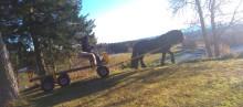Ny kuskutbildning startar – brukshästkörningen kommer tillbaka till Wången