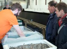 Fjärrvärme från Preem skapar hållbar odling av jätteräkor i Lysekil