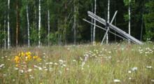 Vi inventerar ängar och betesmarker i sommar