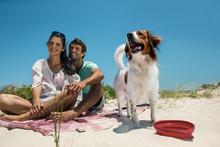Tierischer Urlaub – sicher verreisen mit Hund & Co.
