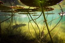 Värdefulla vatten – en spännande upplevelsutställning i Äppellunden vid Rådhustorget