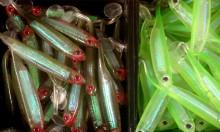 Höga halter av ftalater i jiggar