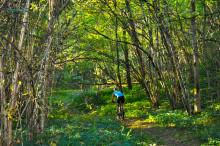 Kaxholmens lövskog kan bli nytt naturreservat