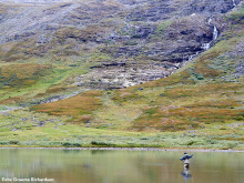Besöksnäringen enig i kritiken av föreslagna ändringar i fjälljakten och fjällfisket