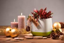 Design zum Verschenken - YULA unterm Weihnachtsbaum