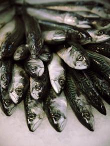Låt Skagerrak bli pilot i EU:s nya fiskeripolitik