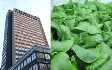 Närodlat på riktigt! Plantagon bygger tio inomhusodlingar i Stockholm – och stockholmarna bjuds in att vara med