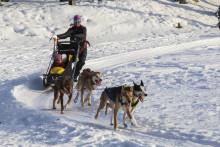 Barnas vinterdag på Maihaugen på søndag