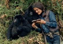 Skuespilleren Sigourney Weaver lægger stemme til ny serie om den verdensberømte zoolog Dian Fosseys liv - og det brutale mord i Rwandas regnskov