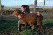 Avel för ökad produktion kan rädda hotade husdjursraser