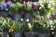 Vårliga evenemang på Sofiero