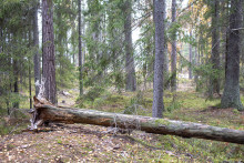 Skogsbada i naturen på söndagar